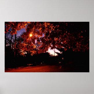 Dusk Maple Backlit by Street Light Poster