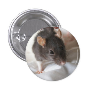 Dusk the rat badge 1 inch round button