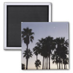 Dusk with Palm Trees Tropical Scene Magnet