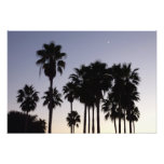 Dusk with Palm Trees Tropical Scene Photo Print