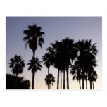 Dusk with Palm Trees Tropical Scene Postcard