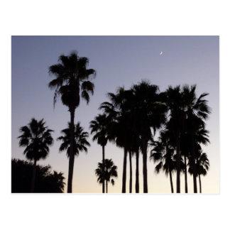 Dusk with Palm Trees Tropical Scene Postcard