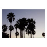 Dusk with Palm Trees Tropical Scene Poster