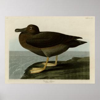 Dusky Albatross Poster