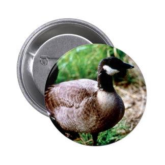 Dusky Canada Goose Button