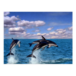 Dusky Dolphins At Play Postcard