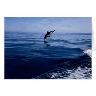 Dusky dolphins, side view, nose dive card