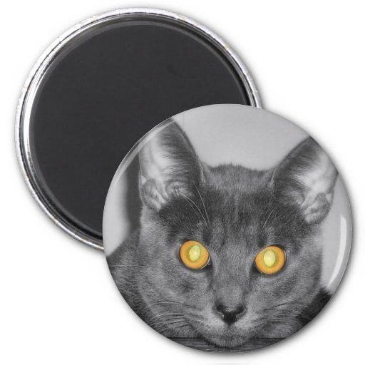 Dusky Gold Magnet
