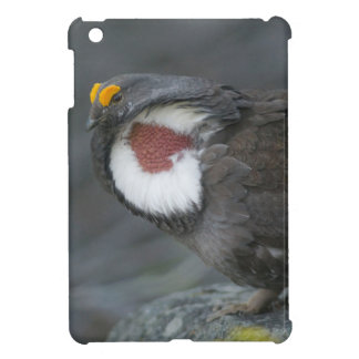 Dusky Grouse displaying, formerly Blue Grouse Cover For The iPad Mini