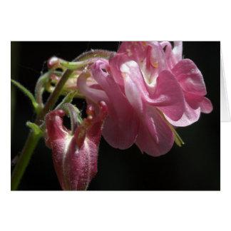 Dusky Pink Aquilegia Card