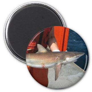 Dusky shark 2 inch round magnet