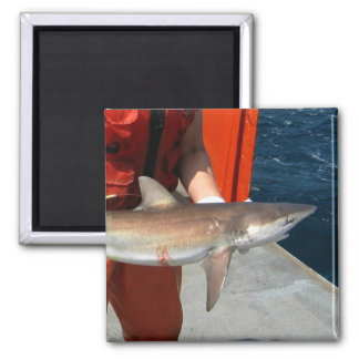 Dusky shark 2 inch square magnet