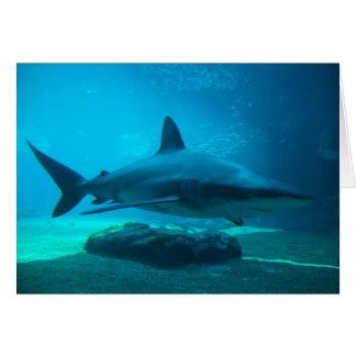 Dusky Shark (Carcharhinus Obscurus), Ushaka Cards