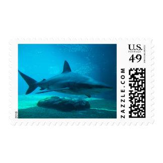 Dusky Shark (Carcharhinus Obscurus), Ushaka Postage Stamp