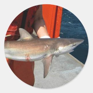 Dusky shark classic round sticker