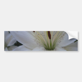 Dusted White Lily Bumper Sticker