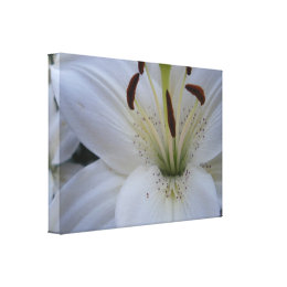 Dusted White Lily Canvas Print