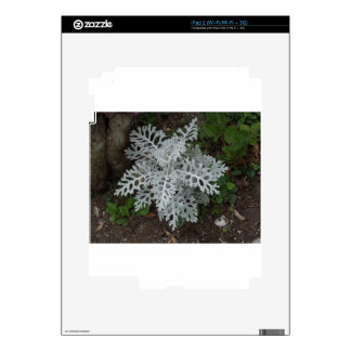Dusty Miller iPad 2 Skins