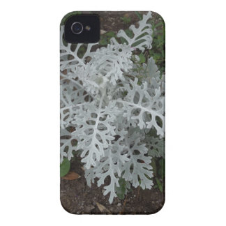 Dusty Miller iPhone 4 Cover