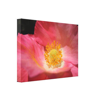 Dusty Pink Colored Poppy Canvas Print