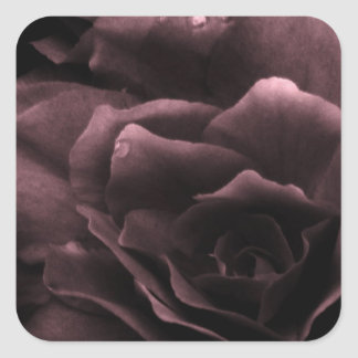Dusty Plum Close Up of a Double Begonia Square Sticker