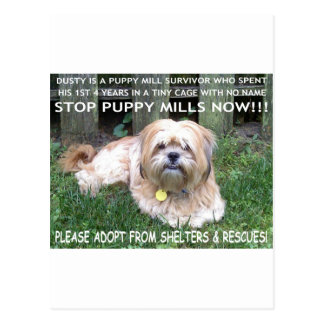DUSTY - PUPPY MILL SURVIVOR POSTCARD