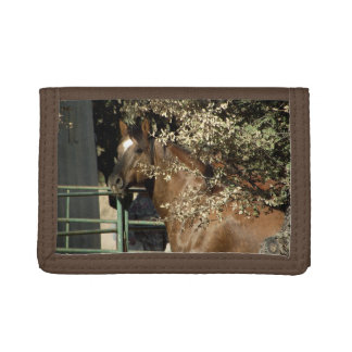 Dusty, Quarter Horse Stallion Wallet