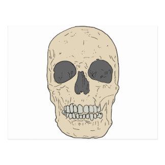 dusty skull postcard