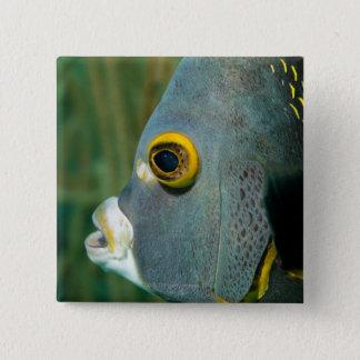 Dutch Antilles, Bonaire, Underwater close-up Button