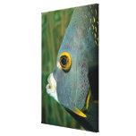 Dutch Antilles, Bonaire, Underwater close-up Stretched Canvas Print