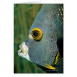 Dutch Antilles, Bonaire, Underwater close-up Cards
