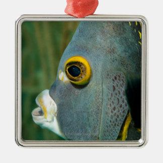 Dutch Antilles, Bonaire, Underwater close-up Metal Ornament