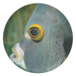 Dutch Antilles, Bonaire, Underwater close-up Party Plates