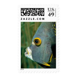 Dutch Antilles, Bonaire, Underwater close-up Postage Stamp