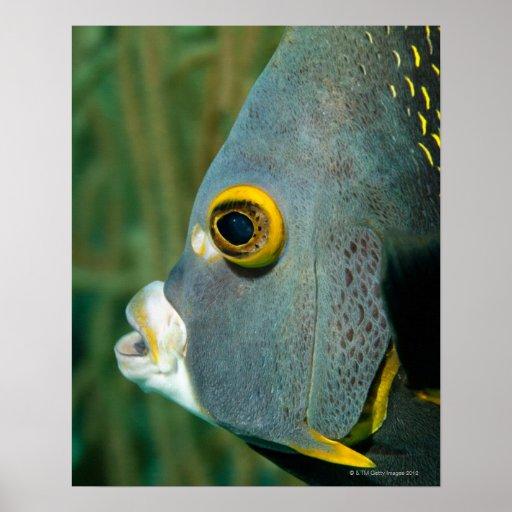Dutch Antilles, Bonaire, Underwater close-up Print