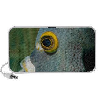 Dutch Antilles, Bonaire, Underwater close-up Notebook Speakers