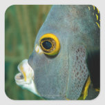 Dutch Antilles, Bonaire, Underwater close-up Square Stickers