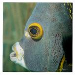 Dutch Antilles, Bonaire, Underwater close-up Ceramic Tiles