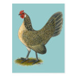 Dutch Bantam:  Blue Quail Hen Postcard