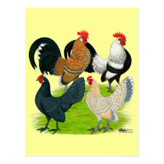Dutch Bantam Quartet Postcard