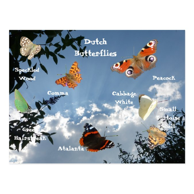 Dutch Butterflies Names Postcard