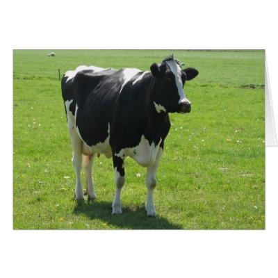 تغذية الابقار والثيران والعجول Dutch_frisian_cow_in_green_meadow_card-p137207054730094725q0yk_400