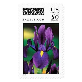 Dutch Iris Postage