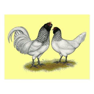 Dutch Owl Beard Chickens Postcard