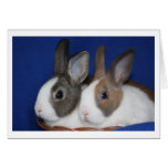 Dutch Rabbit Blank Card