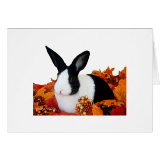 Dutch rabbit in fall leaves card