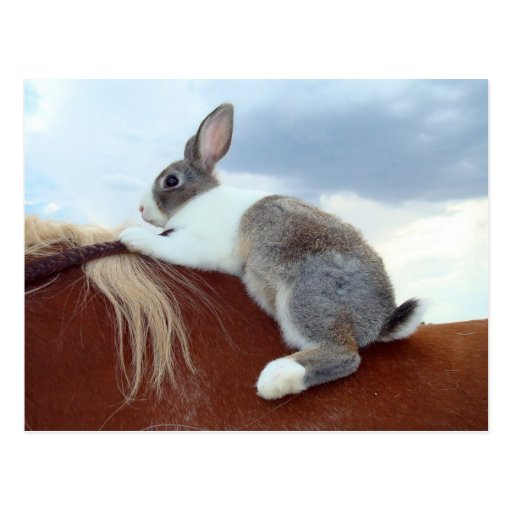 Dutch rabbit riding a horse postcard