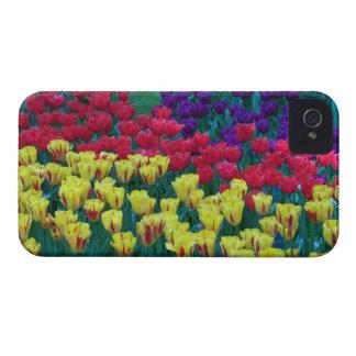 Dutch Tulips Case-Mate iPhone 4 Case