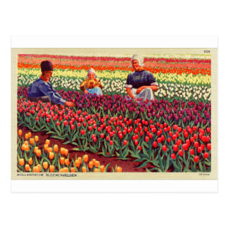 Dutch Tulips Tulpe Retro Vintage Kitsch Amsterdam Postcard