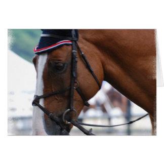 Dutch Warmblood Horse Greeting Card